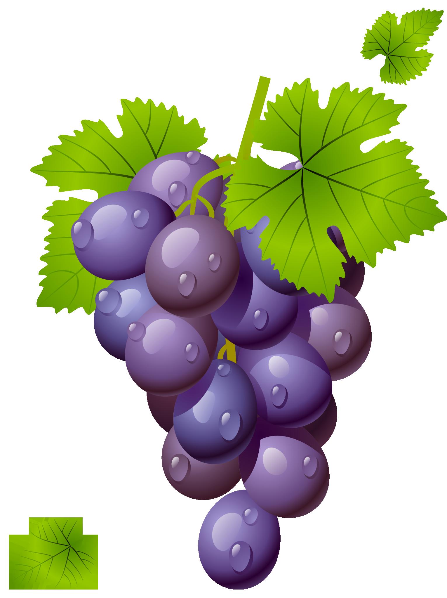 grapes-grape-clipart-grapeclipart-fruit-clip-art-photo-2